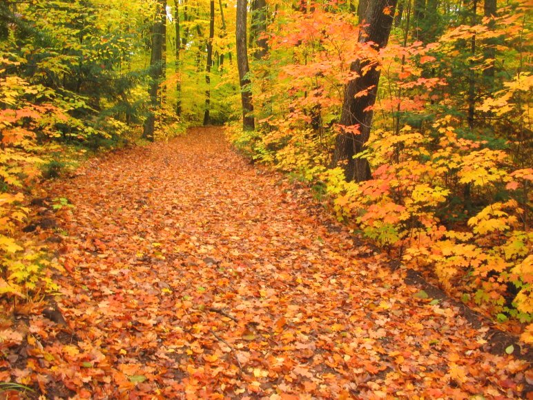 Wisconsin-fall-foliage